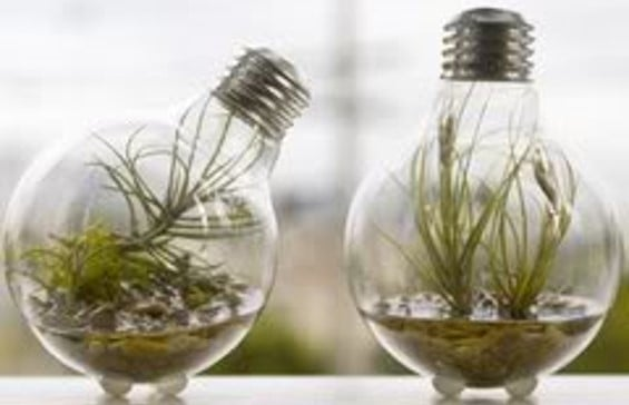 warm climate for innovation